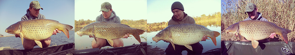 Four carp caught by Jaco Jacobs