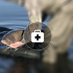 Carp Care: Essential Tools